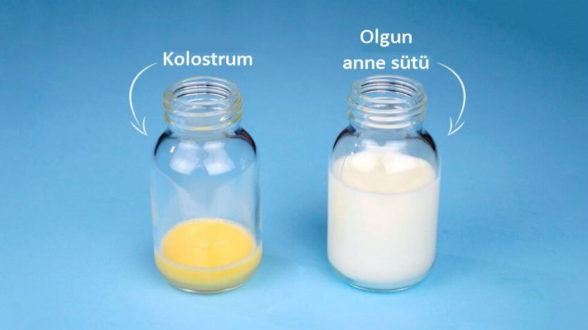 Kolostrum (ağız sütü) Nedir ?